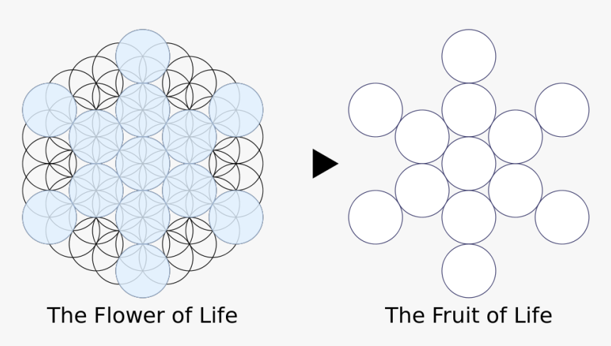 Flower Of Life 13, HD Png Download, Free Download