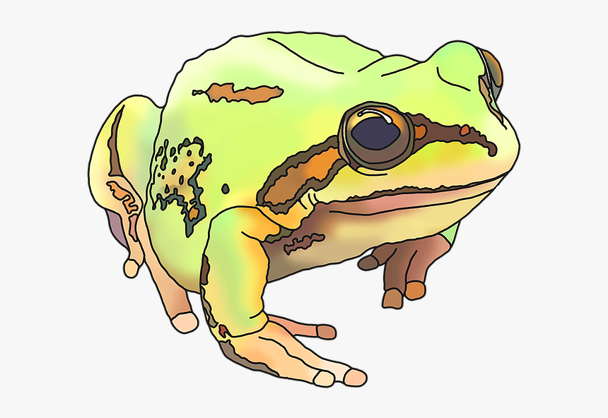 True Frog, HD Png Download, Free Download
