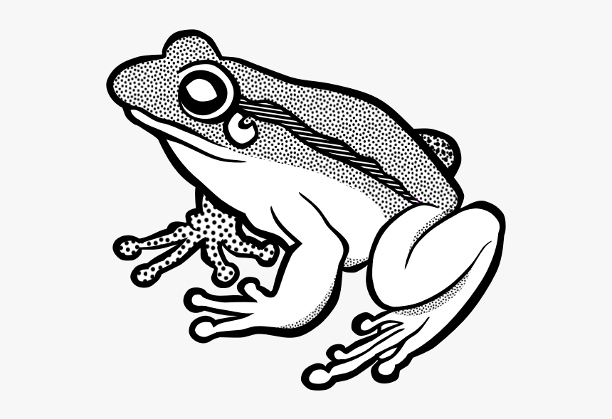 Vector Clip Art Of Waiting Frog In Black And White - Frog Lineart, HD Png Download, Free Download