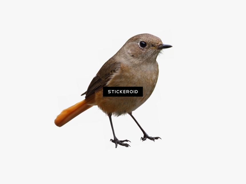bird png download burung png transparent png kindpng burung png transparent png