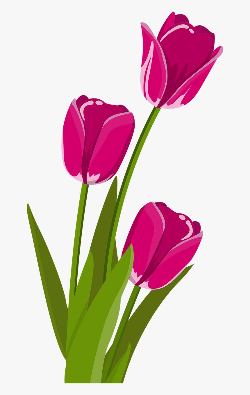 Bunga Tulip Vektor Bunga Vektor Png Transparent Png Kindpng