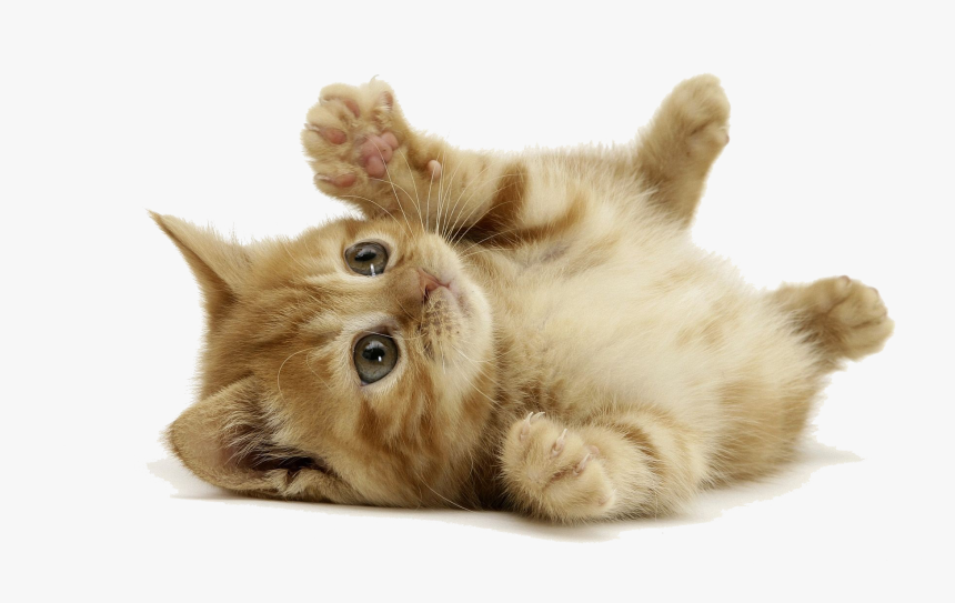 Baby Cat Png Picture - Cute Little Cat, Transparent Png, Free Download