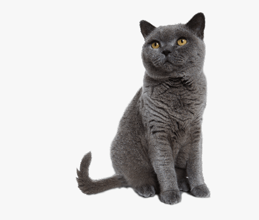 Cat Sitting Transparent Background, HD Png Download, Free Download