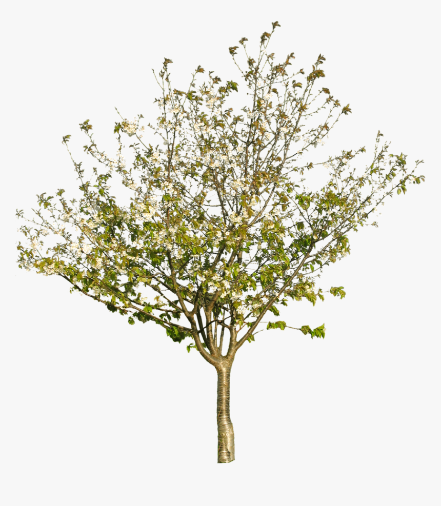 Tree Texture Png - Tree Branch Texture Png, Transparent Png, Free Download