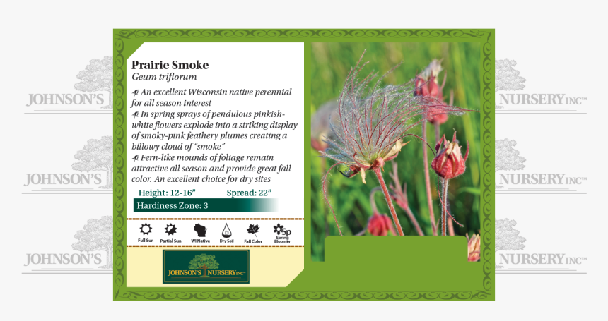 """Prairie Smoke, Three-flowered Avens, Old Man""""s Whiskers - Plant Stella D Oro Daylily, HD Png Download, Free Download"""