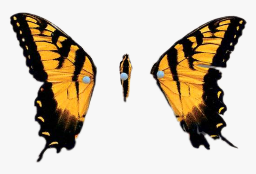 Brand New Eyes Butterfly - Paramore Brand New Eyes Album, HD Png Download, Free Download