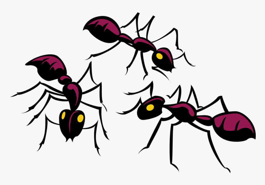 Ants Clipart, HD Png Download, Free Download