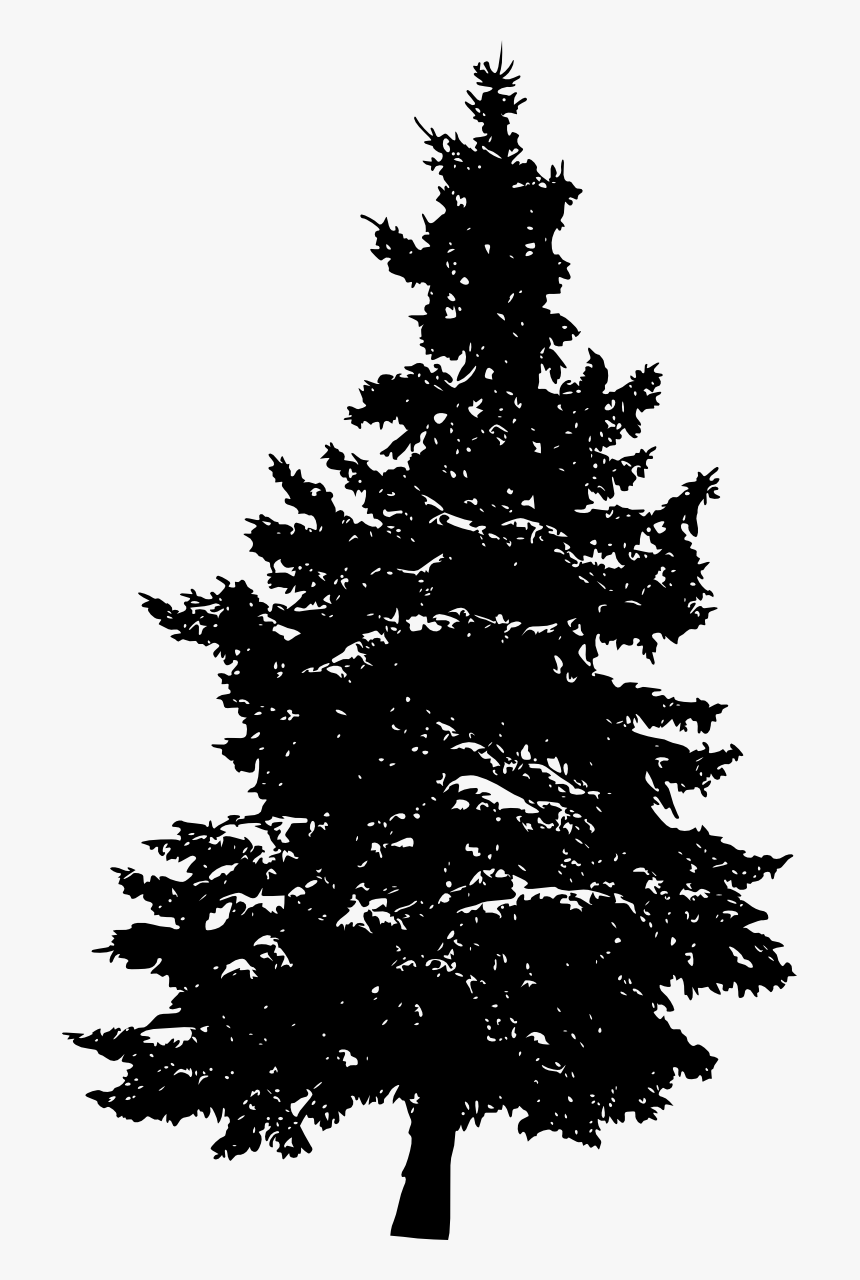 Pine Silhouette Fir Tree Transparent Pine Tree Silhouette Hd Png Download Kindpng