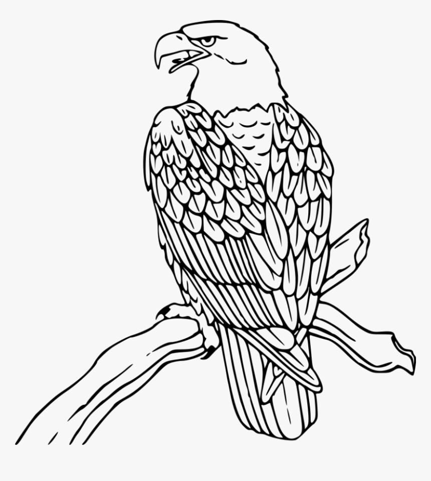 - Bald Eagle Clipart Native - Bald Eagle Coloring Page, HD Png