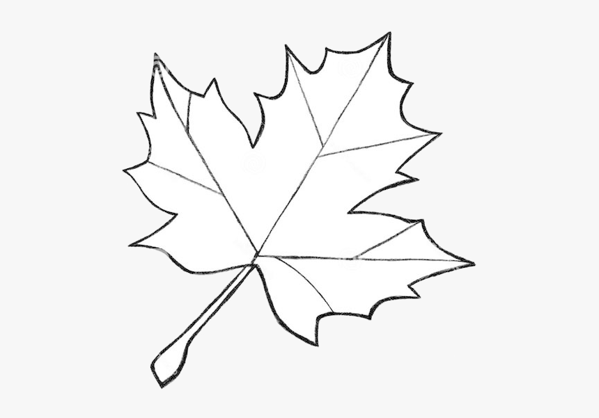 Leaf Outline Clipart Royalty Free Differnt Sizes Rr Fall Leaf Drawing Easy Hd Png Download Kindpng