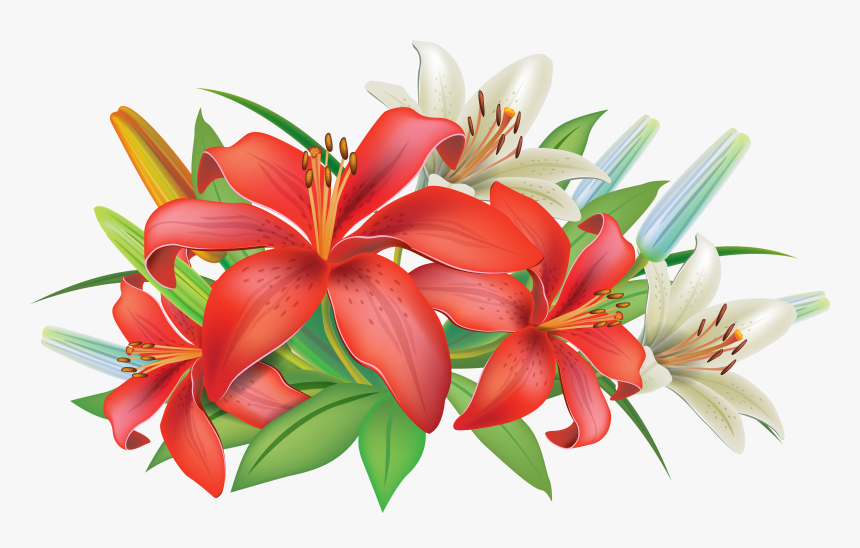 Lily Flower Clipart Png, Transparent Png, Free Download