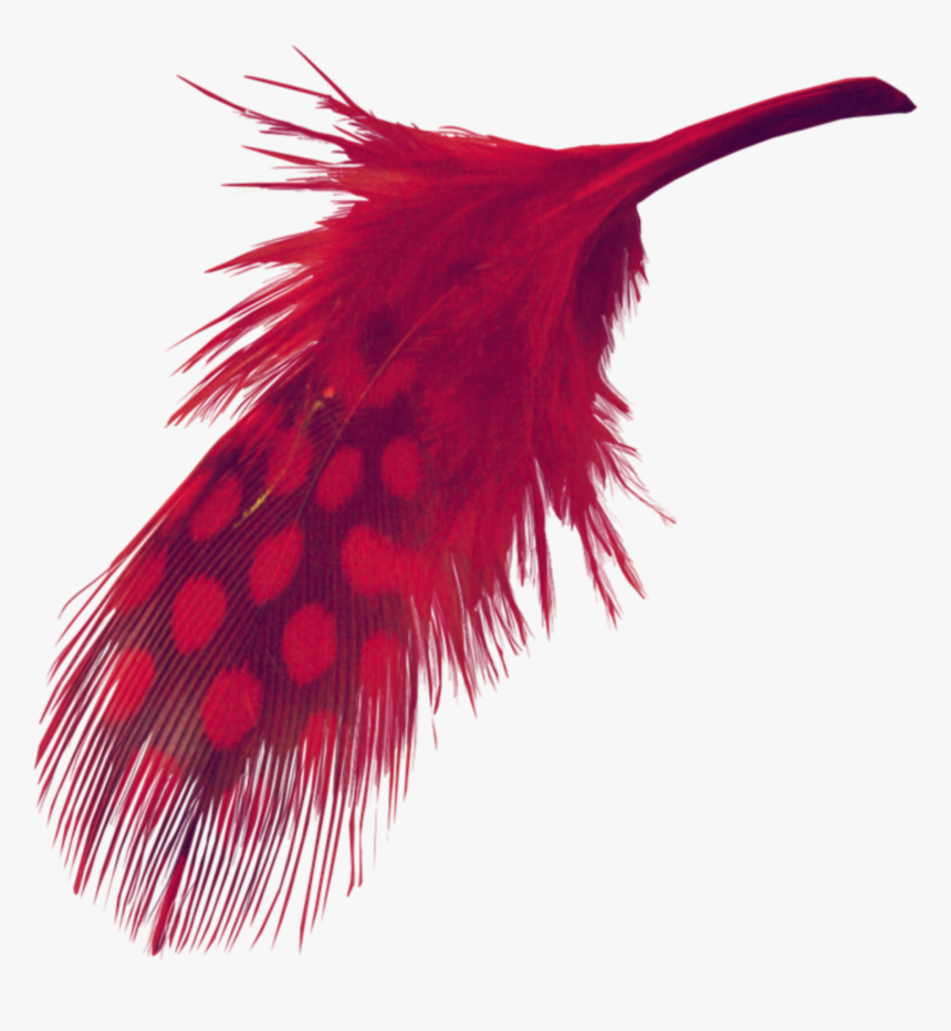 #mq #red #feather #feathers - Transparent Background Red Feather Png, Png Download, Free Download