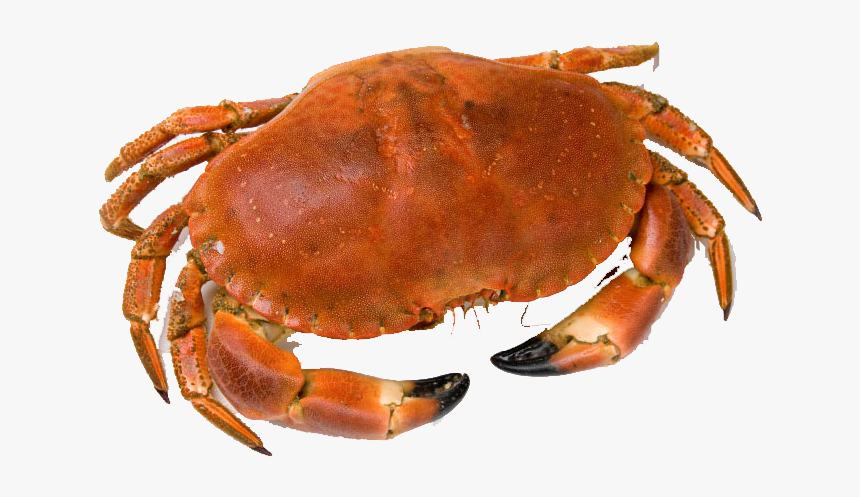 Crab Png Free Download - Whole Crab, Transparent Png, Free Download