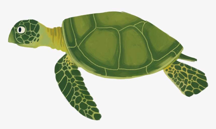 Transparent Sea Plant Png - Sea Turtle Cartoon Transparent, Png Download, Free Download