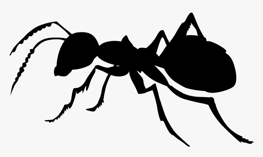 Ant Black And White, HD Png Download, Free Download