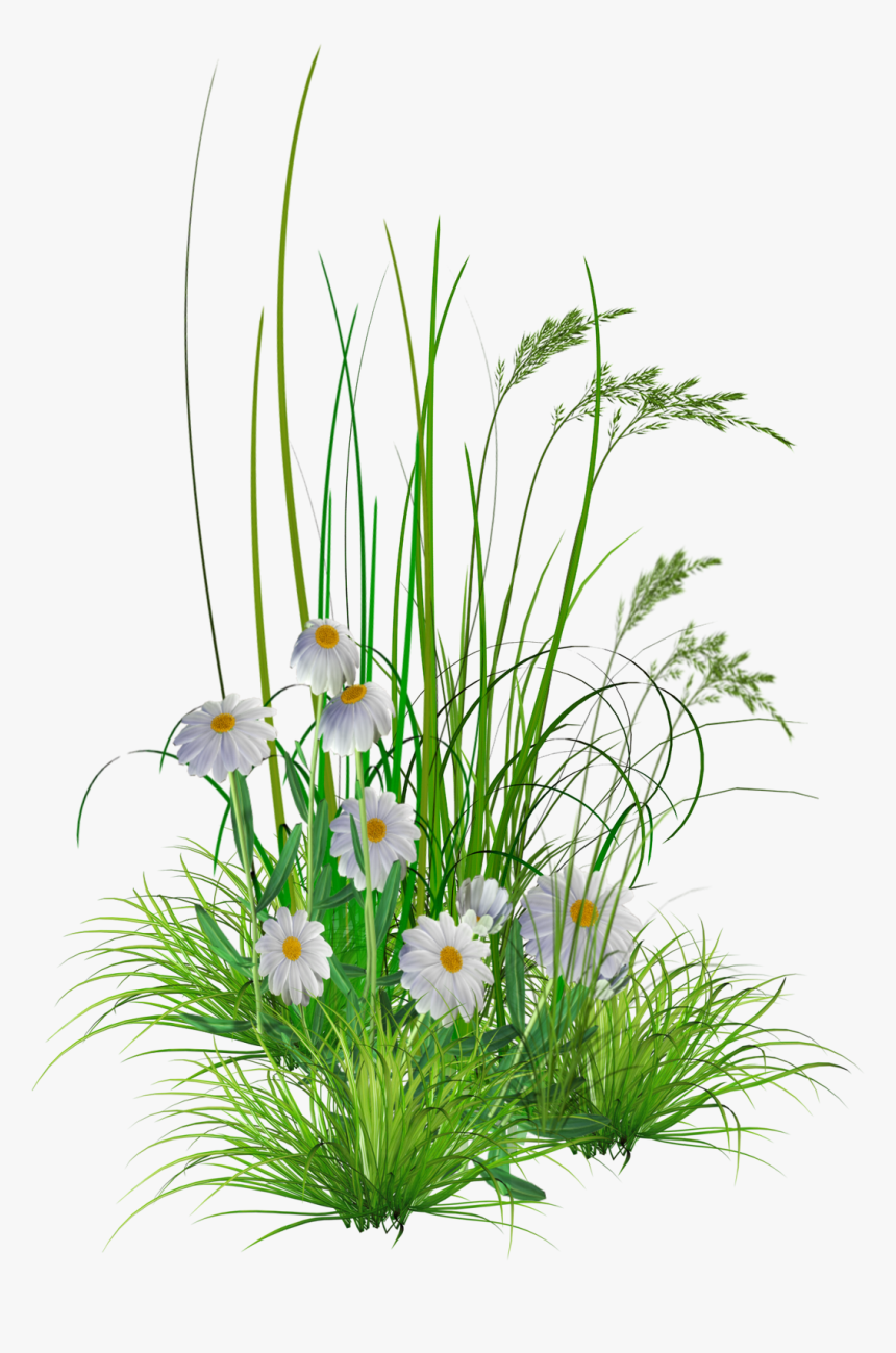 Background Transparent Hd Png - Garden Flower Png, Png Download, Free Download