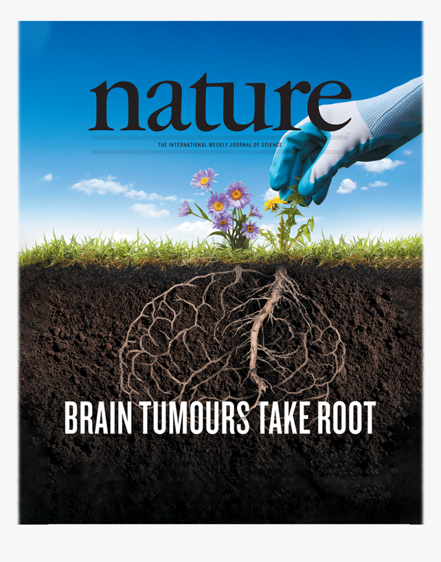 Graphic Of Nature Magazine Cover Showing A Gardener - Nature Brain Tumor 2019 Cover, HD Png Download, Free Download