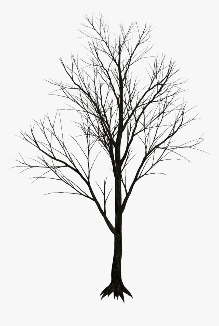 Bamboo Drawing Texture Black Tree White Background Hd Png Download Kindpng