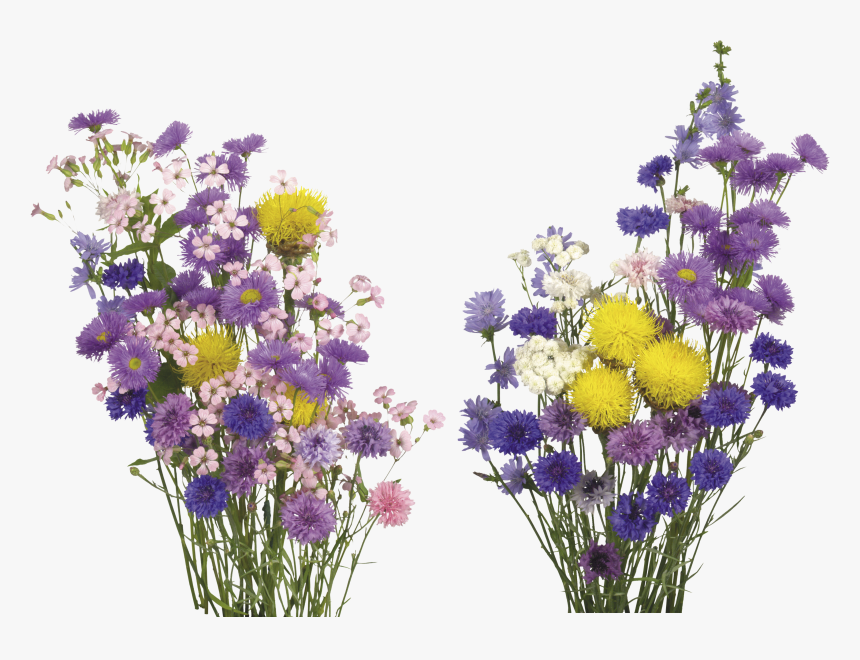 Free Flower Overlays, HD Png Download, Free Download
