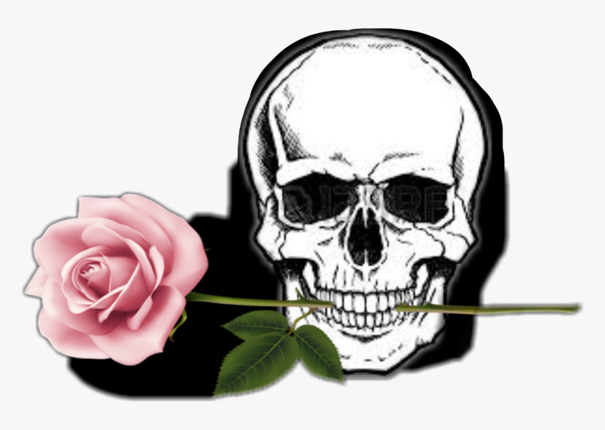#rose #totenkopf #schädel, HD Png Download, Free Download