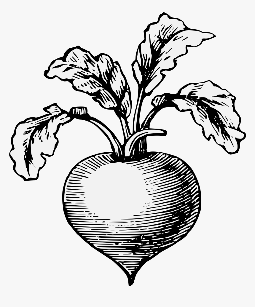 Transparent Radishes Png - Radish Pepper Clipart Black And White, Png Download, Free Download