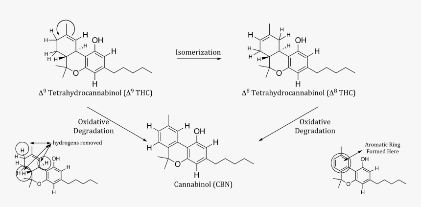 Will Smoking A Joint Show Up On A Drug Test Chart - 4 Benzylamino N Benzyl 1 8 Naphthalimide Mechanism, HD Png Download, Free Download