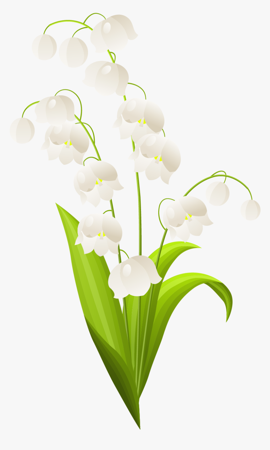 Transparent Easter Border Png - Lily Of The Valley Stem, Png Download, Free Download