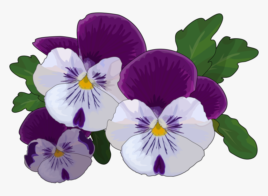 Transparent Pansy Clipart - Pansy Drawing, HD Png Download, Free Download