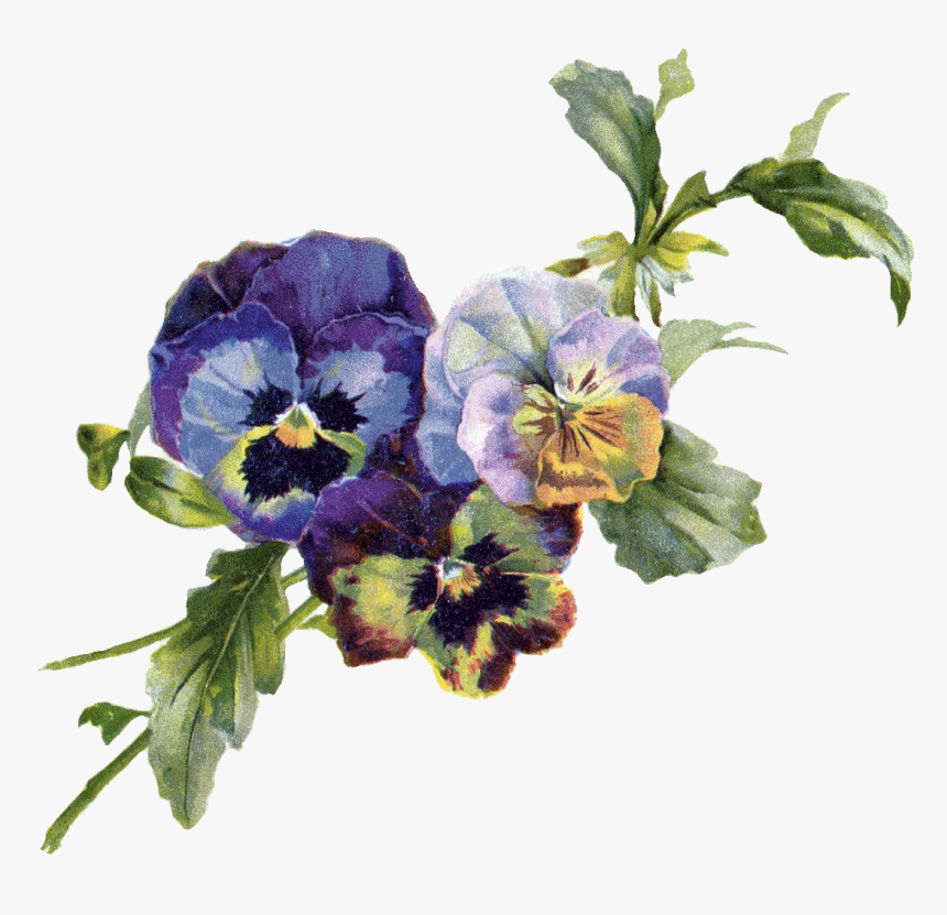 Pansy Vintage Flowers Png, Transparent Png, Free Download