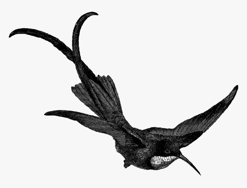 Hummingbird Bird Image Digital Download Illustration - Clip Art, HD Png Download, Free Download