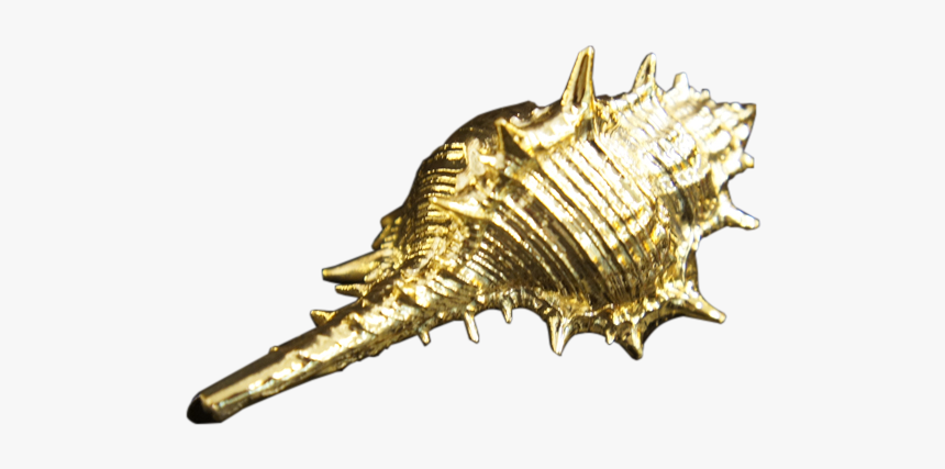 Gold Sea Shell Png, Transparent Png, Free Download